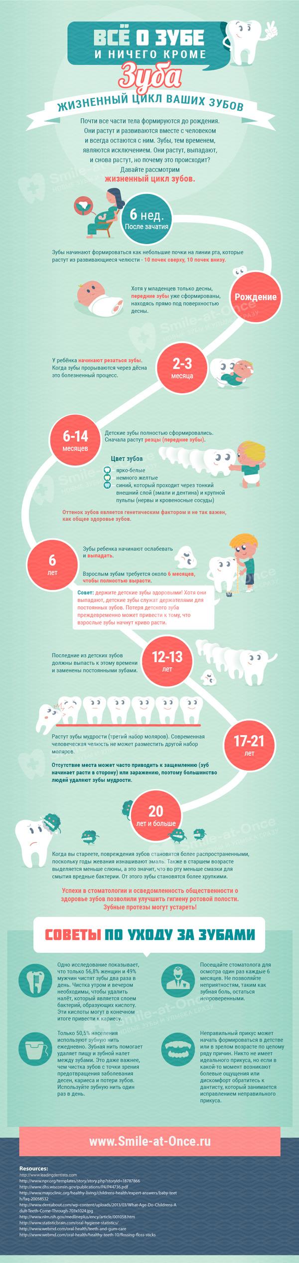 Жизненный цикл зубов инфографика